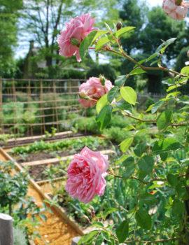 Jardin Potager à Eyrignac