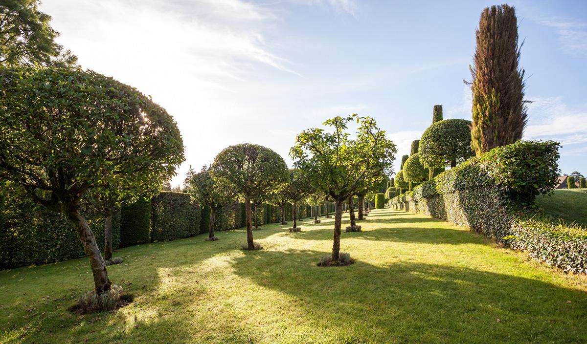 Taille Du Laurier Tin les conseils jardinage d'eyrignac : la taille arbustive
