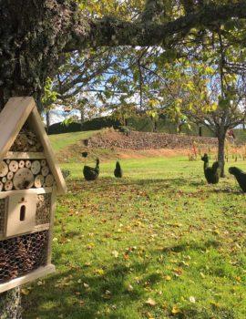 La basse cour végétale des jardins d'Eyrignac