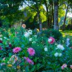 Jardin Fleuriste ©Dan Courtice